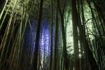 花灯路の竹林2