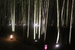 花灯路の竹林3