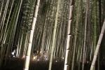 花灯路の竹林4