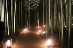 花灯路の竹林5
