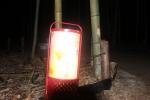 竹と灯籠3