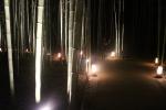 花灯路と竹林6