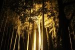 花灯路と竹林8