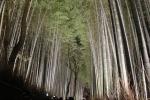 花灯路の竹林12