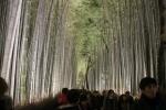 花灯路と竹林13