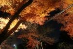 花灯路と紅葉2