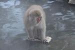 温泉に入るかもしれない猿