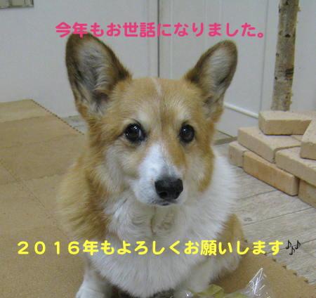 IMG_6654 2