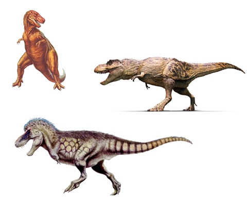 T-Rex_evolution.jpg