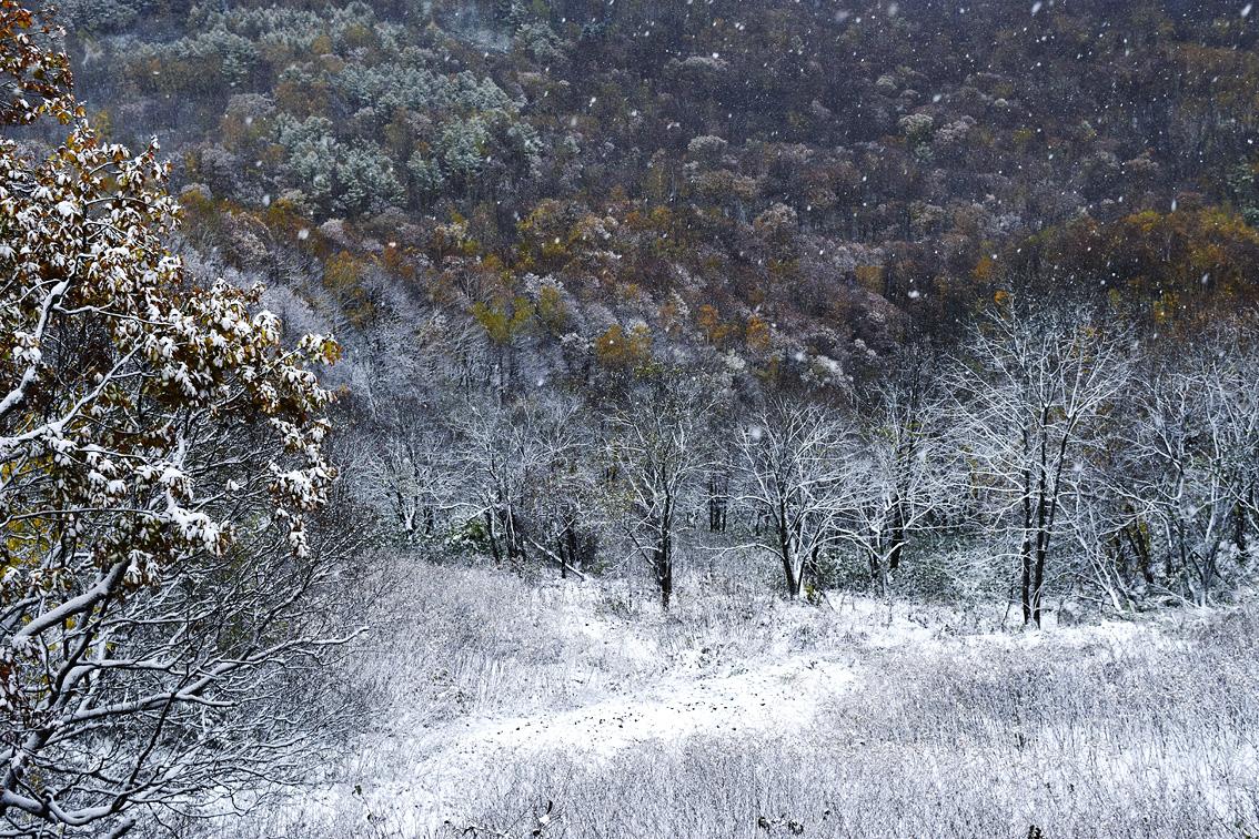 初雪紅葉2