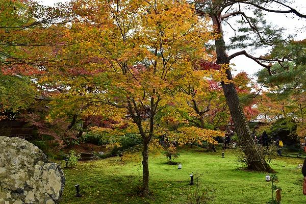 京都の紅葉6