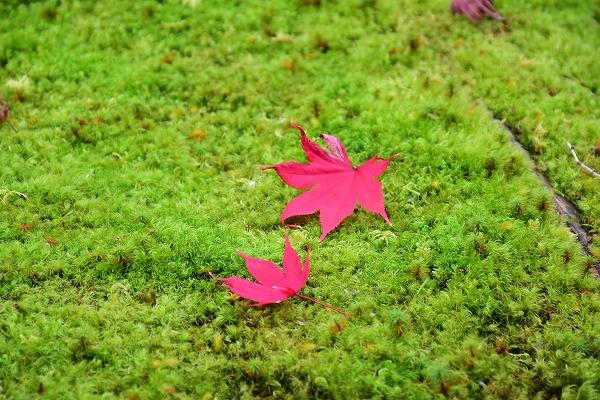 京都の紅葉7