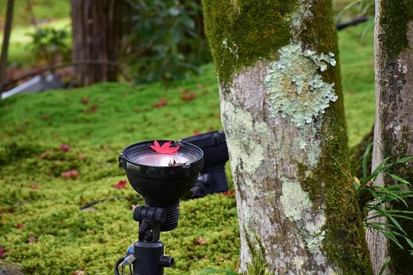 京都の紅葉8