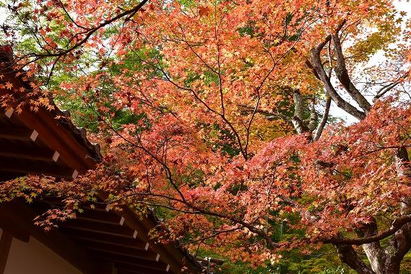 京都の紅葉2015 097