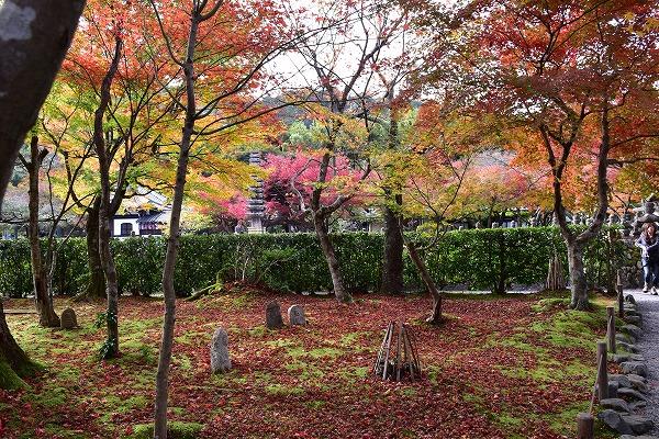 京都の紅葉2015 132