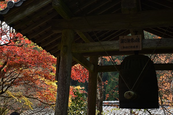 大原の紅葉8