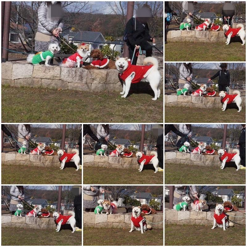 クリスマス&桃太郎うちの子記念日。。。3