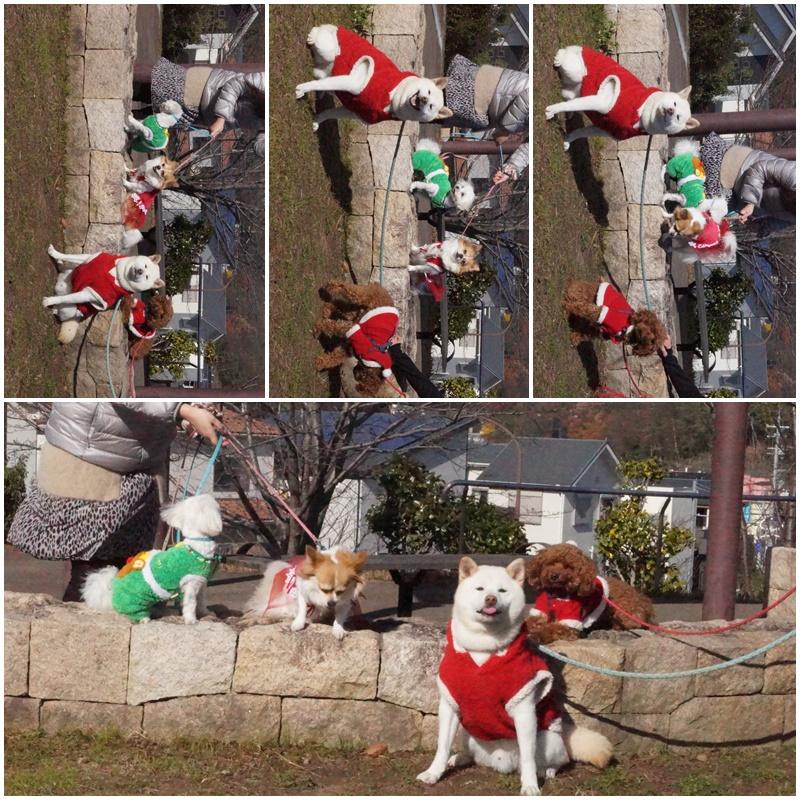 クリスマス&桃太郎うちの子記念日。。。4