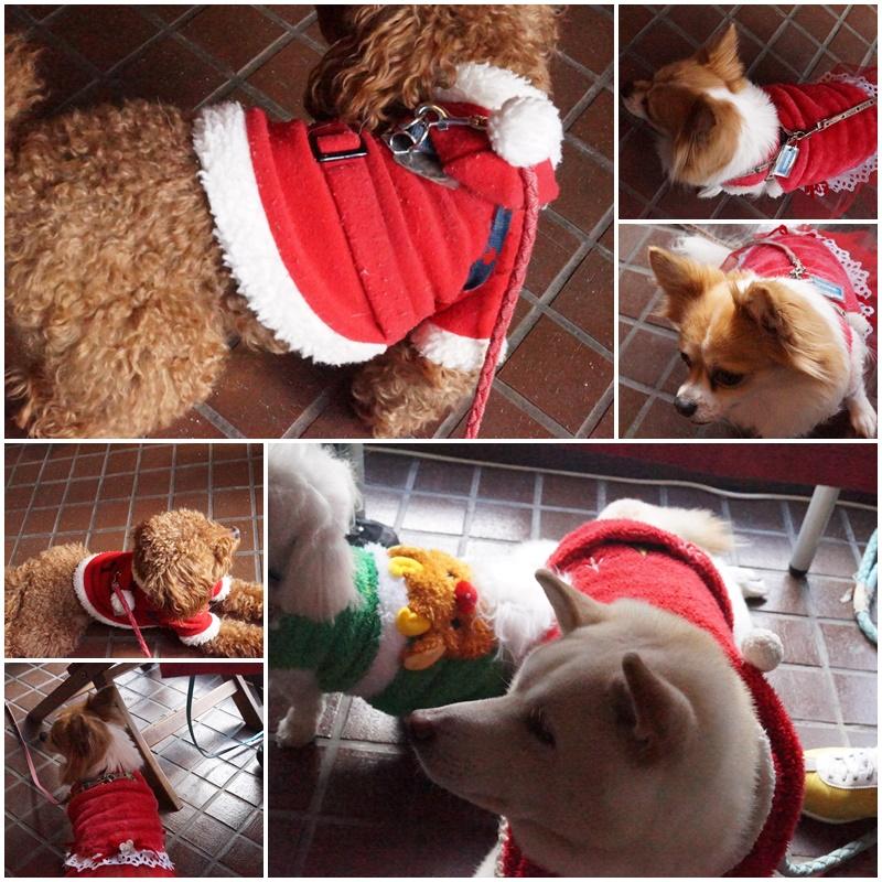 クリスマス&桃太郎うちの子記念日。。。7