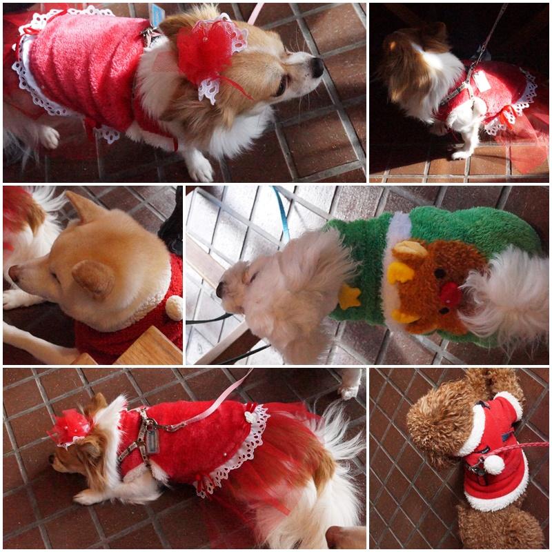 クリスマス&桃太郎うちの子記念日。。。8