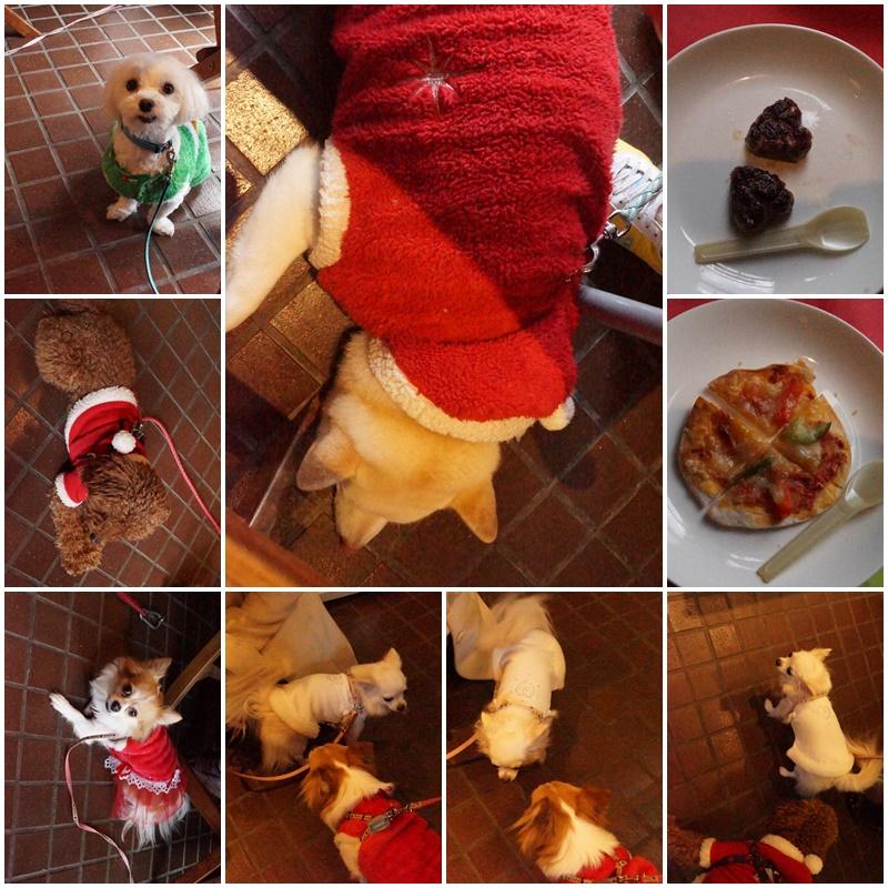 クリスマス&桃太郎うちの子記念日。。。13