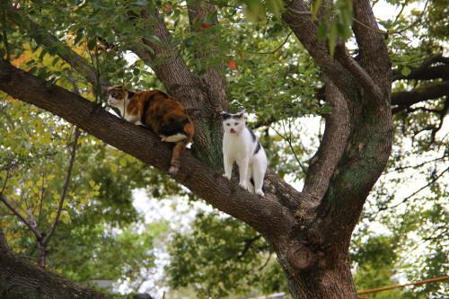 木の上の2人