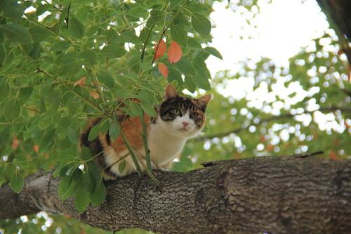 木の上のアイ