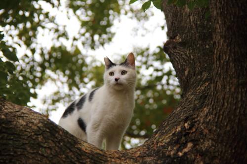 木の上のマロ