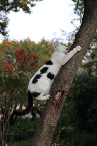 木登りマロ