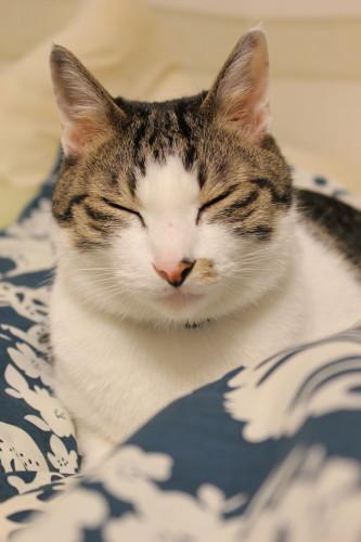 眠いベツヲ