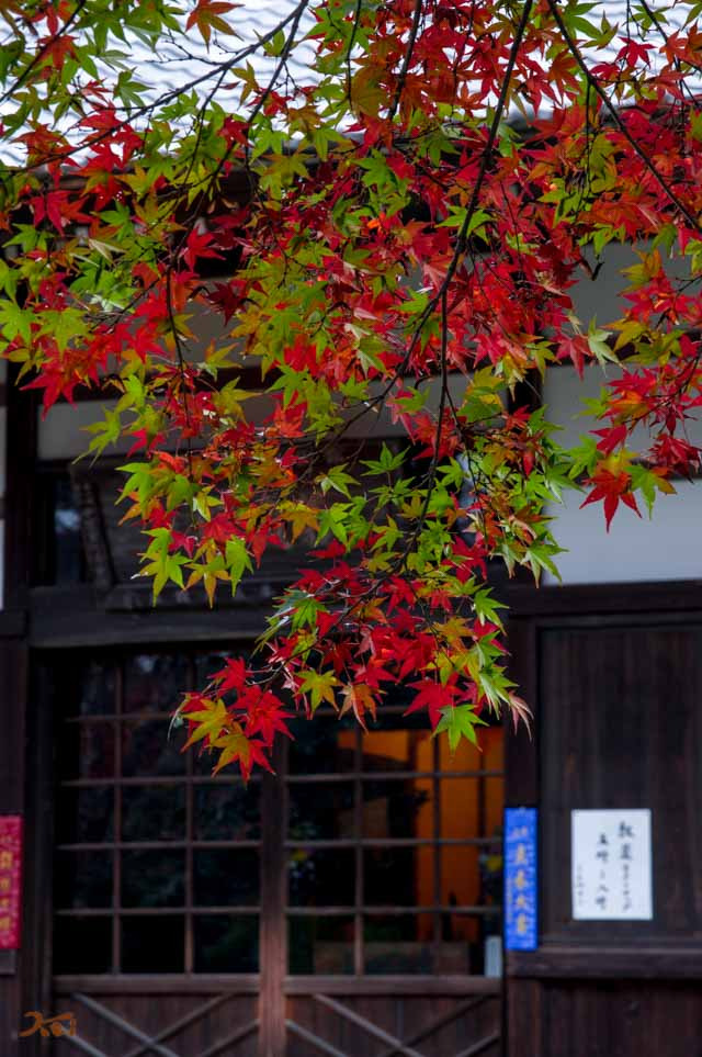 20151123太田金龍寺の紅葉11
