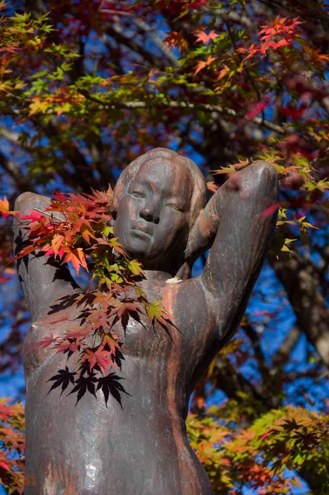 20151128冬桜_藤岡桜山公園14