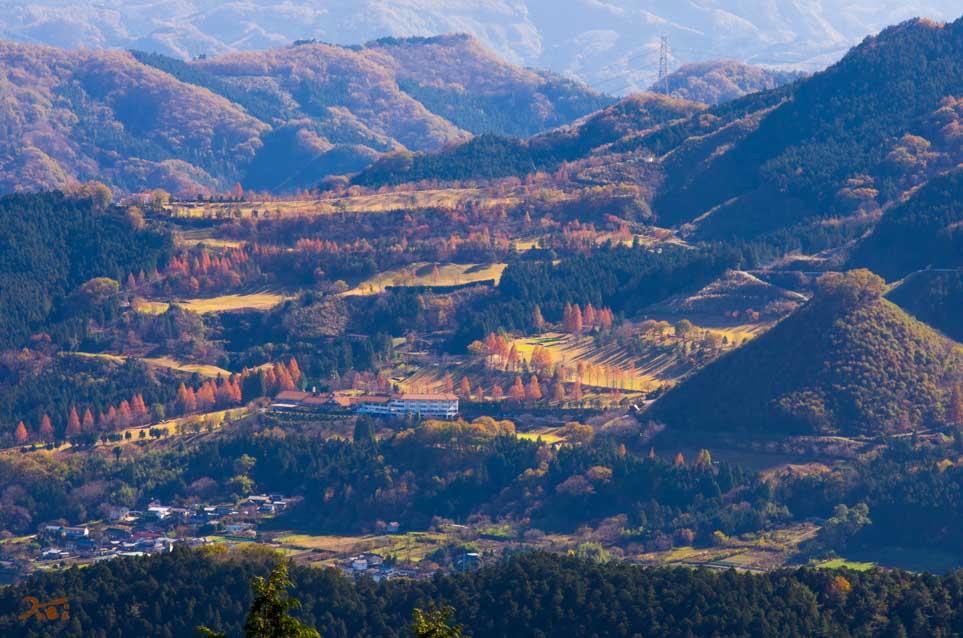 20151128冬桜_藤岡桜山公園06