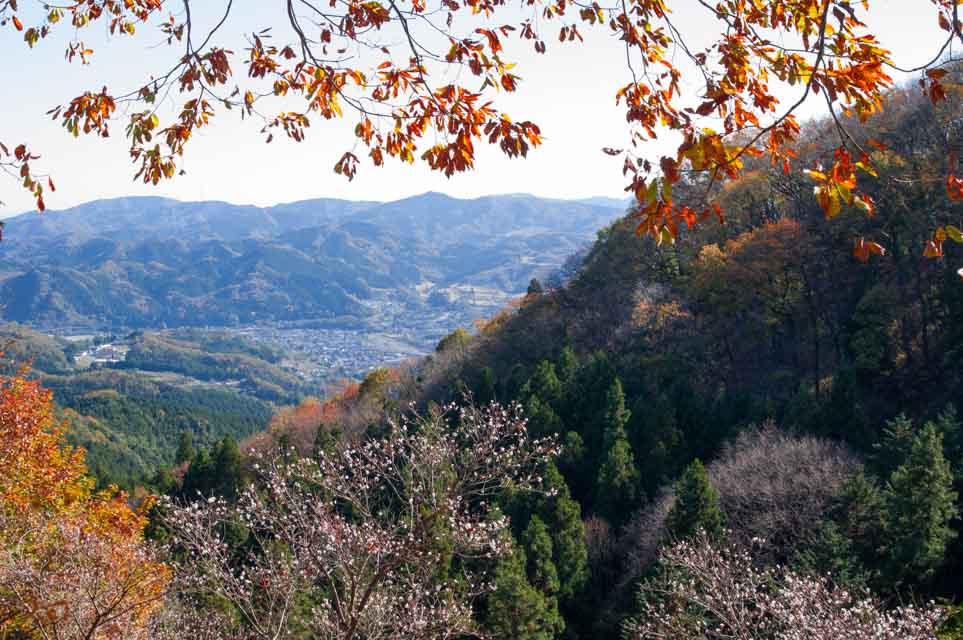 20151128冬桜_藤岡桜山公園07