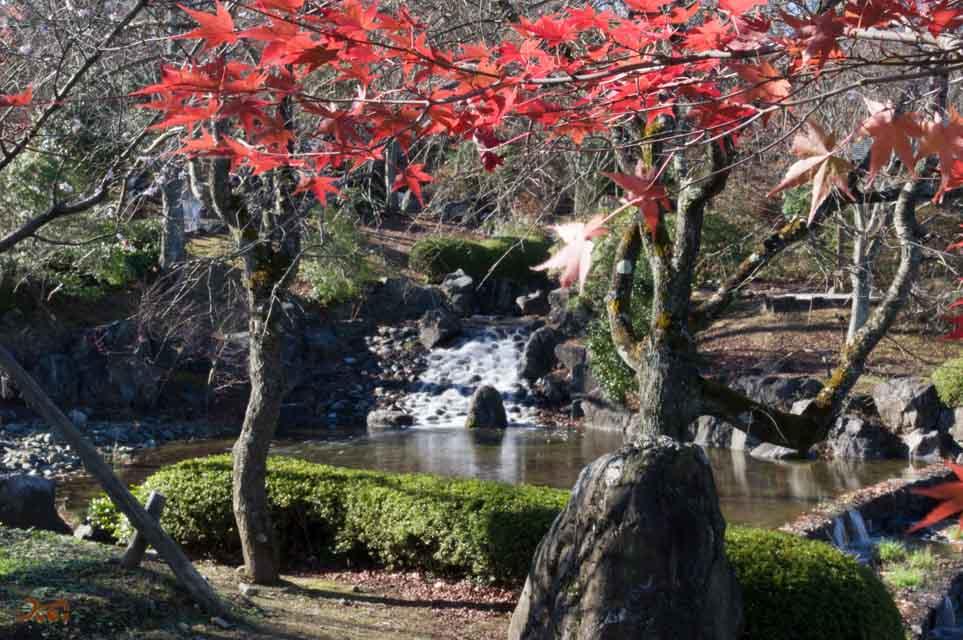 20151128冬桜_藤岡桜山公園03