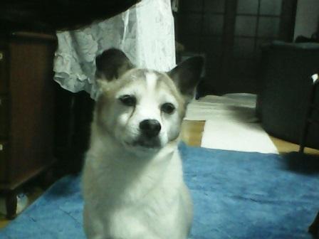 サンディ14歳 (2)