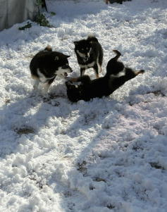 雪 3黒2
