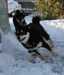 雪 マチャ 2