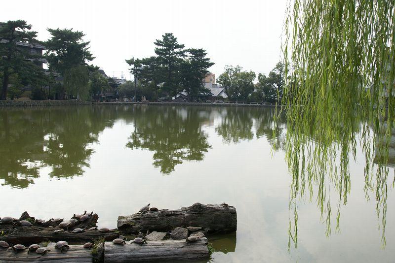 奈良・猿沢池