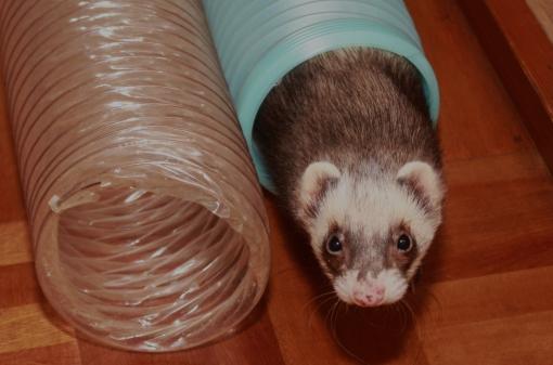 ミッキーのトンネル遊び