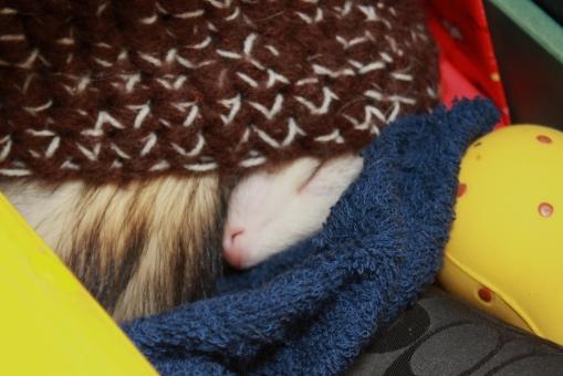 秘密基地の帽子で眠るマルコ