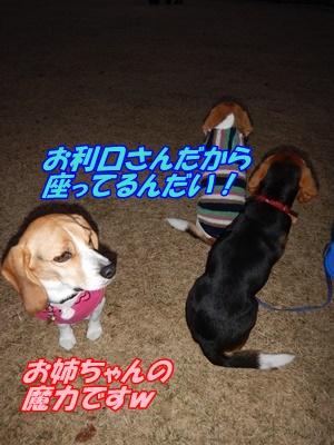 DSCN0178_201512132248035f7.jpg