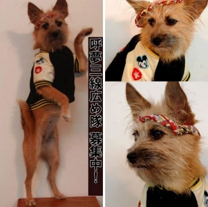 看板犬 愛犬サンシンちゃん