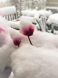 雪の朝 (3)