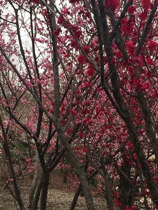 西風梅園苑(5)