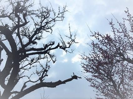 西風梅苑 (7)