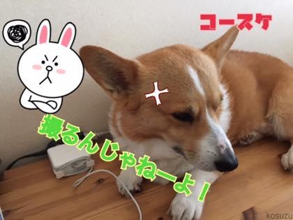 th_IMG_1243.jpg