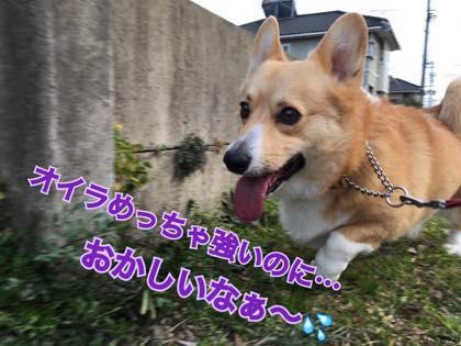 th_IMG_2723.jpg