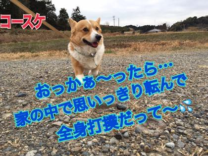 th_IMG_2725.jpg