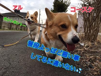 th_IMG_2727.jpg